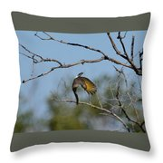 Flying Flicker Throw Pillow