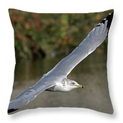 Flying Sea Gull - Eugene Oregon Throw Pillow