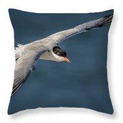Flying Tern  4691 Throw Pillow