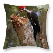 Foraging Pileated Woodpecker Throw Pillow