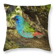 Forbes Parrot Finch Throw Pillow