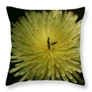 Fiore Giallo Throw Pillow