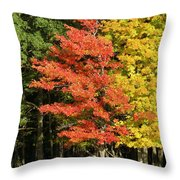 Forest Door Throw Pillow