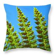 Forest Ferns Art Prints Blue Sky Botanical Baslee Troutman Throw Pillow