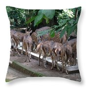 Forest Inspection Bungalow  Throw Pillow