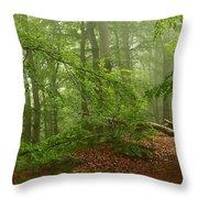 Forest Light 3 Throw Pillow