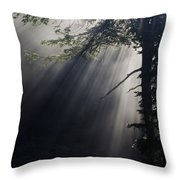 Forest Rays Throw Pillow