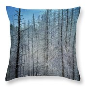 Forest Secrets  7917 Throw Pillow