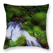 Forest Stream. Benmore Botanic Garden Throw Pillow
