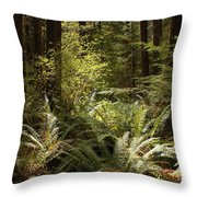 Forest Sunlight And Shadows  Throw Pillow