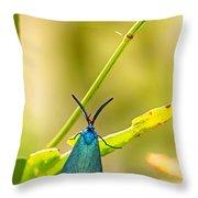Forester Moth  Throw Pillow