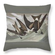 Fork-tail Petrel Throw Pillow