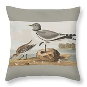 Fork-tailed Gull Throw Pillow