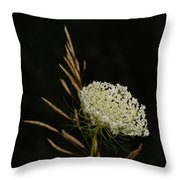 Formal Queen Anne's Lace Study Portrait Throw Pillow
