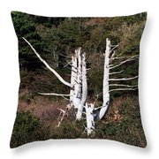 Forms In Nature Throw Pillow
