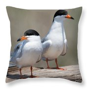Forster's Terns Throw Pillow