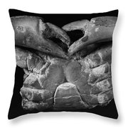 Fossil: Miocene Crab Throw Pillow