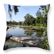 Fountain At The Swamp Throw Pillow