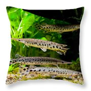Four Aquarium Fishes In Zoo Throw Pillow