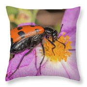 Four-spotted Blister Beetle - Mylabris Quadripunctata Throw Pillow