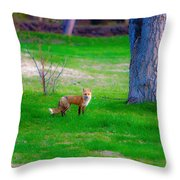 Fox Of Boulder County Throw Pillow