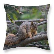 Fox Squirrel On A Branch  Throw Pillow