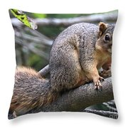 Fox Squirrel On A Branch - Southern Indiana Throw Pillow