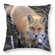 Fox Stare Throw Pillow