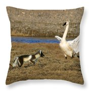 Fox Vs Swan Throw Pillow