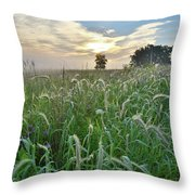 Foxtail Grasses In Glacial Park Throw Pillow