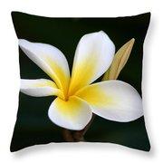 Fragrant Hawaiian Plumeria Maui Throw Pillow
