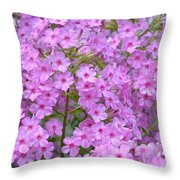 Fragrant Phlox Throw Pillow