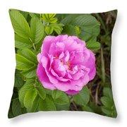 Fragrant Rugosa Throw Pillow