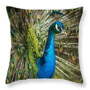 Framed In Feathers Throw Pillow