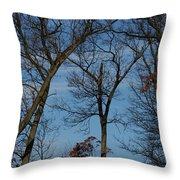 Framed In Oak - 1 Throw Pillow