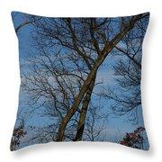 Framed In Oak - 2 Throw Pillow