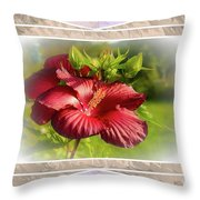 Framed Red Hibiscus Throw Pillow