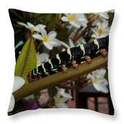 Frangipani Tree And Caterpillar Throw Pillow