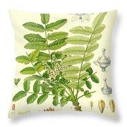 Frankincense Throw Pillow