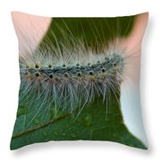 Fred II Throw Pillow