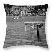 Freedom Is A Seagull Name Black And White Throw Pillow