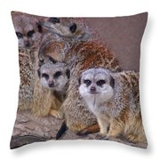 Freezing Meer Cats Throw Pillow