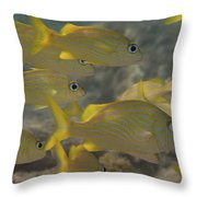 French Grunts School Throw Pillow