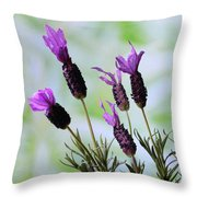 French Lavender Throw Pillow