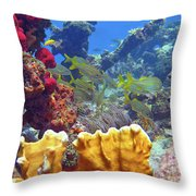French Reef 1 Throw Pillow
