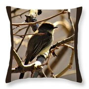 Frenchbroad Flycatcher Throw Pillow