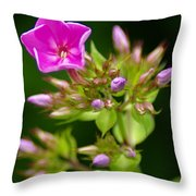 Fresh And Happy Throw Pillow
