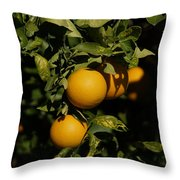 Fresh Oranges Throw Pillow