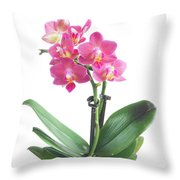 Fresh Pink Orchid In Pot Throw Pillow