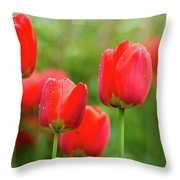 Fresh Spring Tulips Flowers With Water Drops In The Garden  Throw Pillow